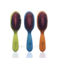Cartel Brosse Cheveux Pneumatique Sanglier /1 à ANGLET